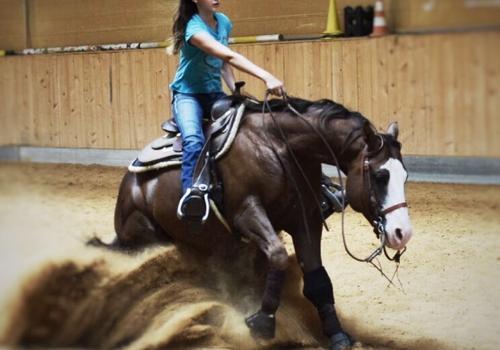 Pferdefoto