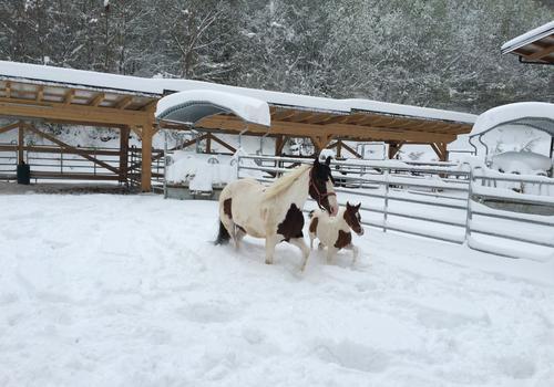 Paint Horse im Schnee